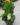 12 planter